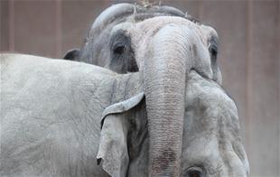 Se hvem der vandt den helt store elefantoplevelse i Zoologisk Have