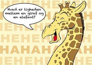 Hvad er ligheden mellem en giraf og en elefant?