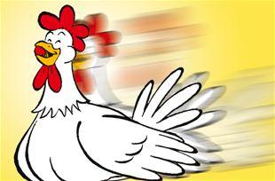 Hjælp hønemor med at finde hendes kyllinger